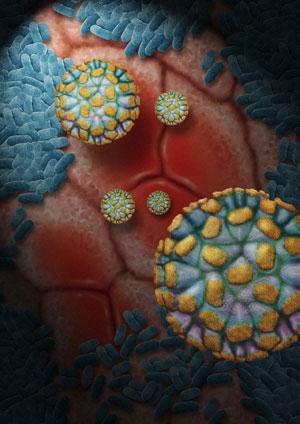 norovirus edinburgh 2018