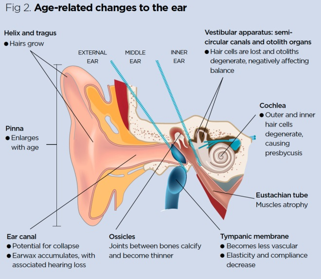 ear anatomy diagram projects anatomy and physiology of ageing 6 the eyes and ears nursing times  anatomy and physiology of ageing 6 the