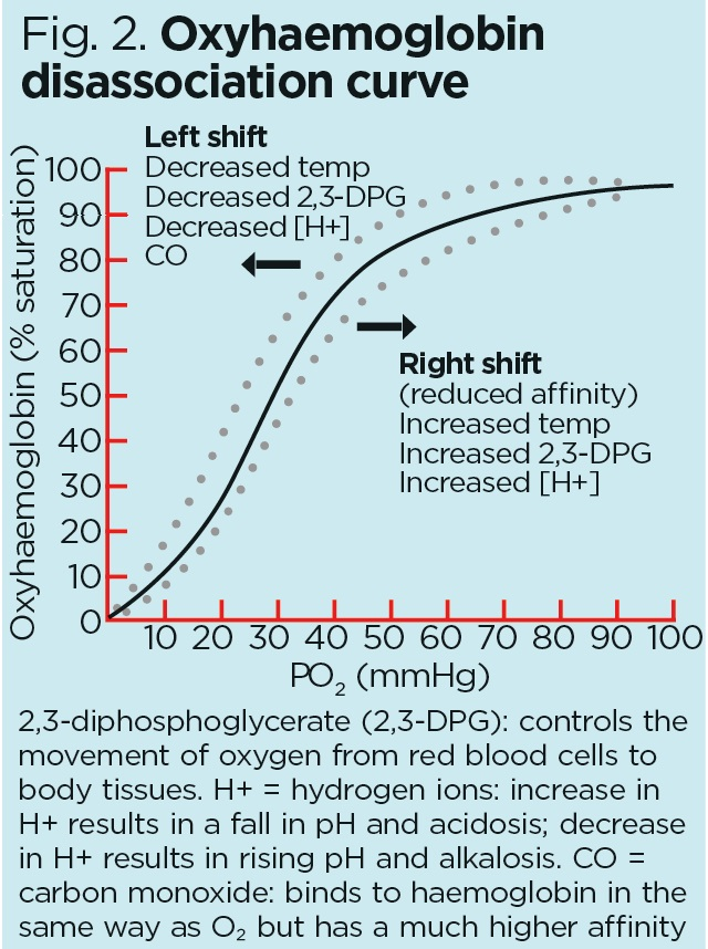 Respiratory rate 2: anatomy and physiology of breathing