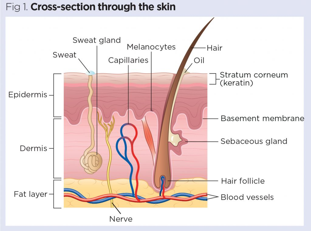 Skin 1: the structure and functions of the skin | Nursing TimesNursing Times