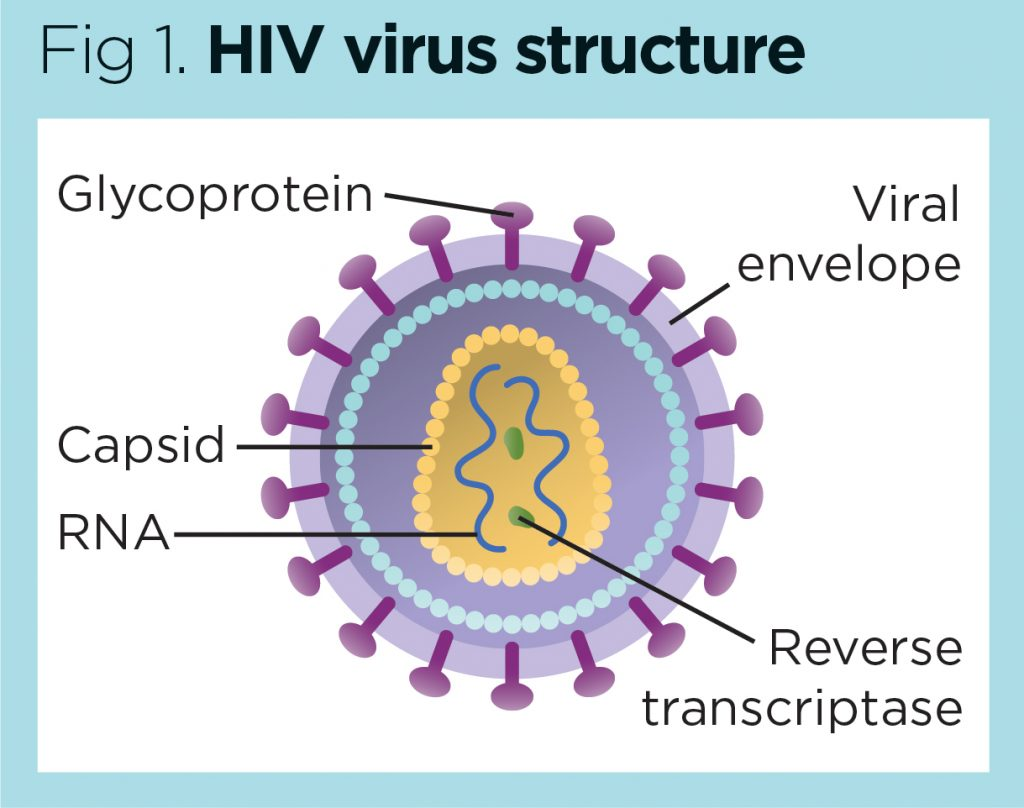 New Cause of Inflammation in People with HIV Identified